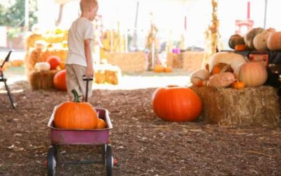 Carve Out Some Fun: 14 Pumpkin Patches to Pick-Your-Own